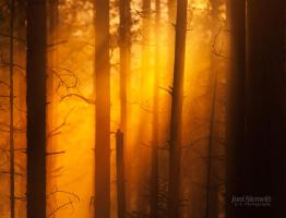 Magic In The Forest II by JoniNiemela