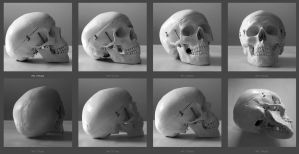 Skull reference images by T-Tiger