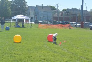 2014 Dog Festival, Treiball Session 2 by Miss-Tbones