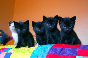 Five Kittens by TinyCueCard