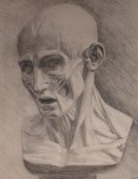 Flayed head study detail by tecciztecatl