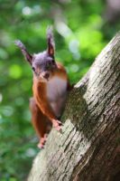 Squirrel on the log by luka567