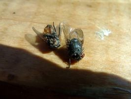 Dead Flies by Piok