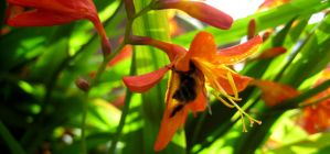 Bumble bee by Bazil14