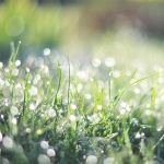 DEW by sandrawiklander