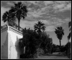 Palms in black and white by quevedo3