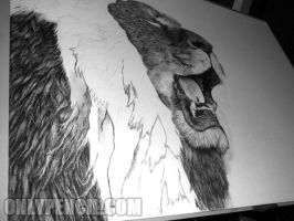 30'x40' Lion Drawing - WIP 2 by chandito
