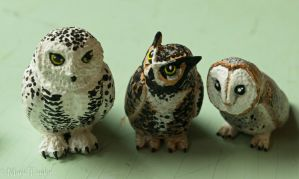 Owl Collection by phacelia