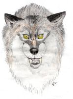 Pissed off wolf by Vlcek