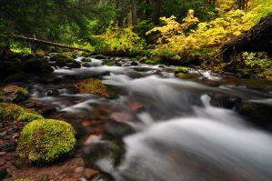 Cold Spring Creek Study 2011 #2 by greglief