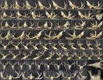 Different Angles of a Deer Skull by XeiArt