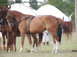 Hungarian Festival Stock 093 by CinderGhostStock