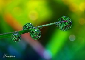 Colorful Dews by diensilver
