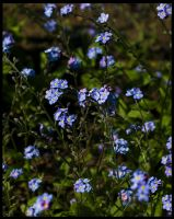 Forget Me Not... by FeliFee
