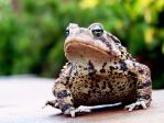 Fall Toad by skandyl