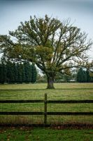Just A tree view by Partists