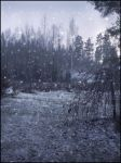 First Snow I by Eirian-stock