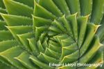 Cactus Spiral Spikes by edthefred