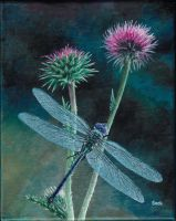Dragonfly and Thistles by sockypoo