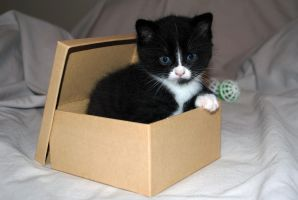 kitty and box 4 by LucieG-Stock