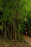 bamboo by blur-stock