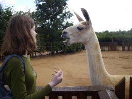 Colchester Zoo photos 17 by pan77155