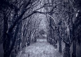 ..Road.. to.. .peRdiTioN... by Anotheroutsider