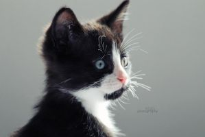 Black and White by sisselPhotography