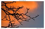 tree branch silhouette by yellowcaseartist