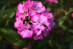 Flowers 069 by Ivi75