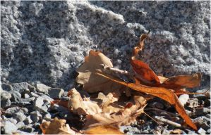 Dried leaf and gravel 2 by Kattvinge