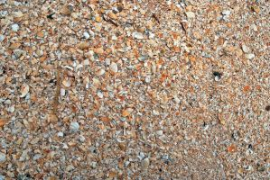 Shells textures 0018 by ronaldfrederick