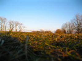 Grass by VMISoul