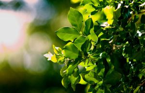 Lively Leaves by hoangnhat1996