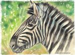 Zebra by UkkiRainbow