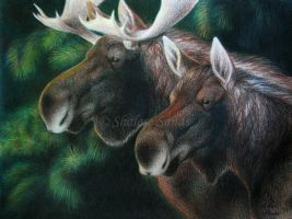 Moose Pair by Misted-Dream