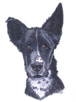 Smooth Collie Puppy watercolor by RoseThistleArtworks
