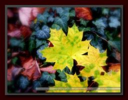 Warm_Breath_Of_COLORs by cmg2901