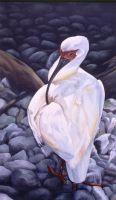 """White Ibis"" by demolitionwoman"