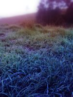 Frosty Pasture 6 by GoblinStock