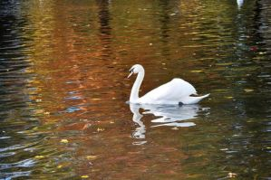 Swan by McNish95