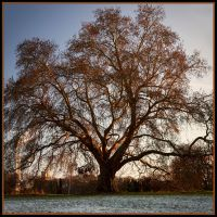 Winter Tree II by grimleyfiendish