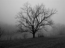 Misted tree by harrietsfriend