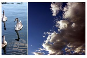 swans and sky by spiti84