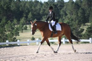 Extended Trot Stock 1 by kquint