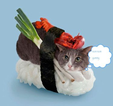 Sushi-cats-4 by johnnydepp101