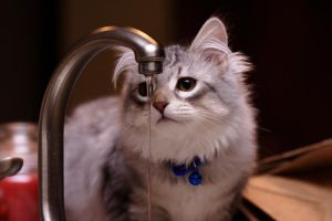 Bandit and Faucet no. 4 by Mischi3vo