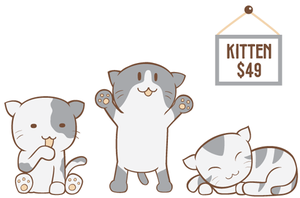 kittens for sale by shandya
