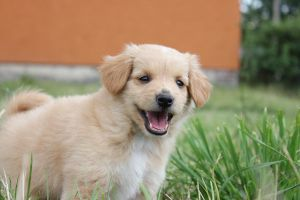 Adorable Puppy by Sashay007