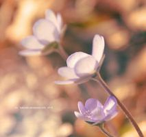 0850 Flowers by Holunder